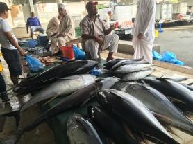 tuna at the fish souk